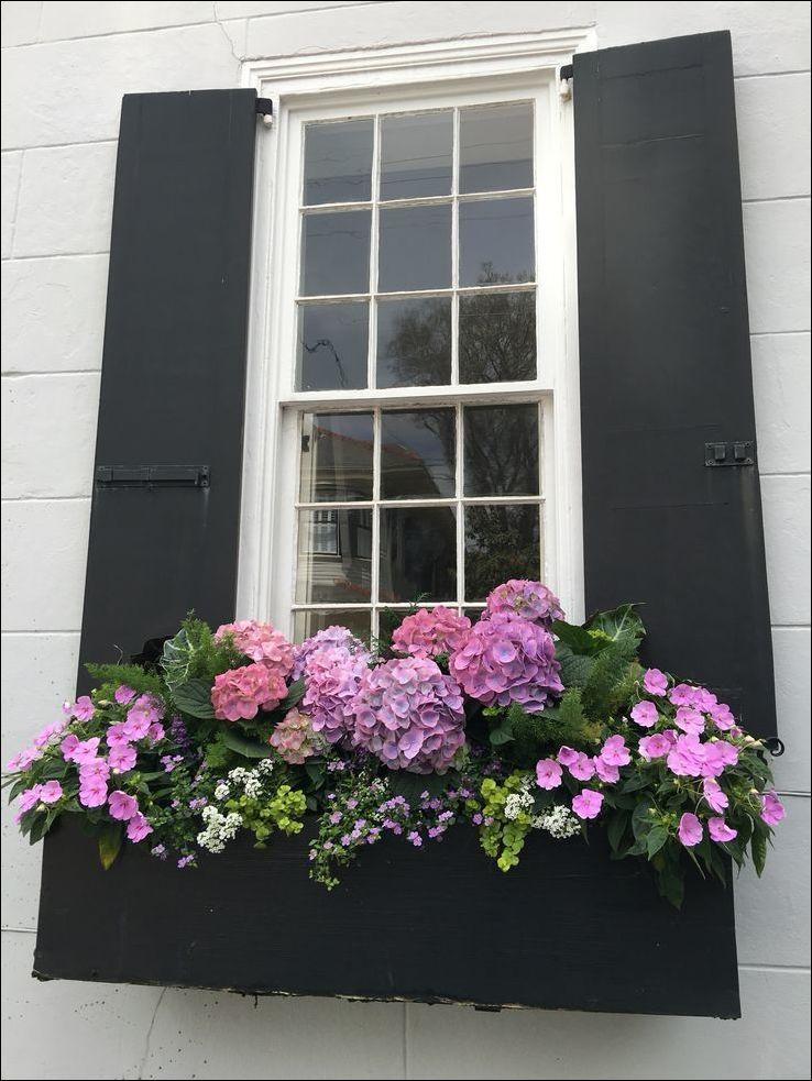 оформление цветами окна городских квартир фото воспользуется