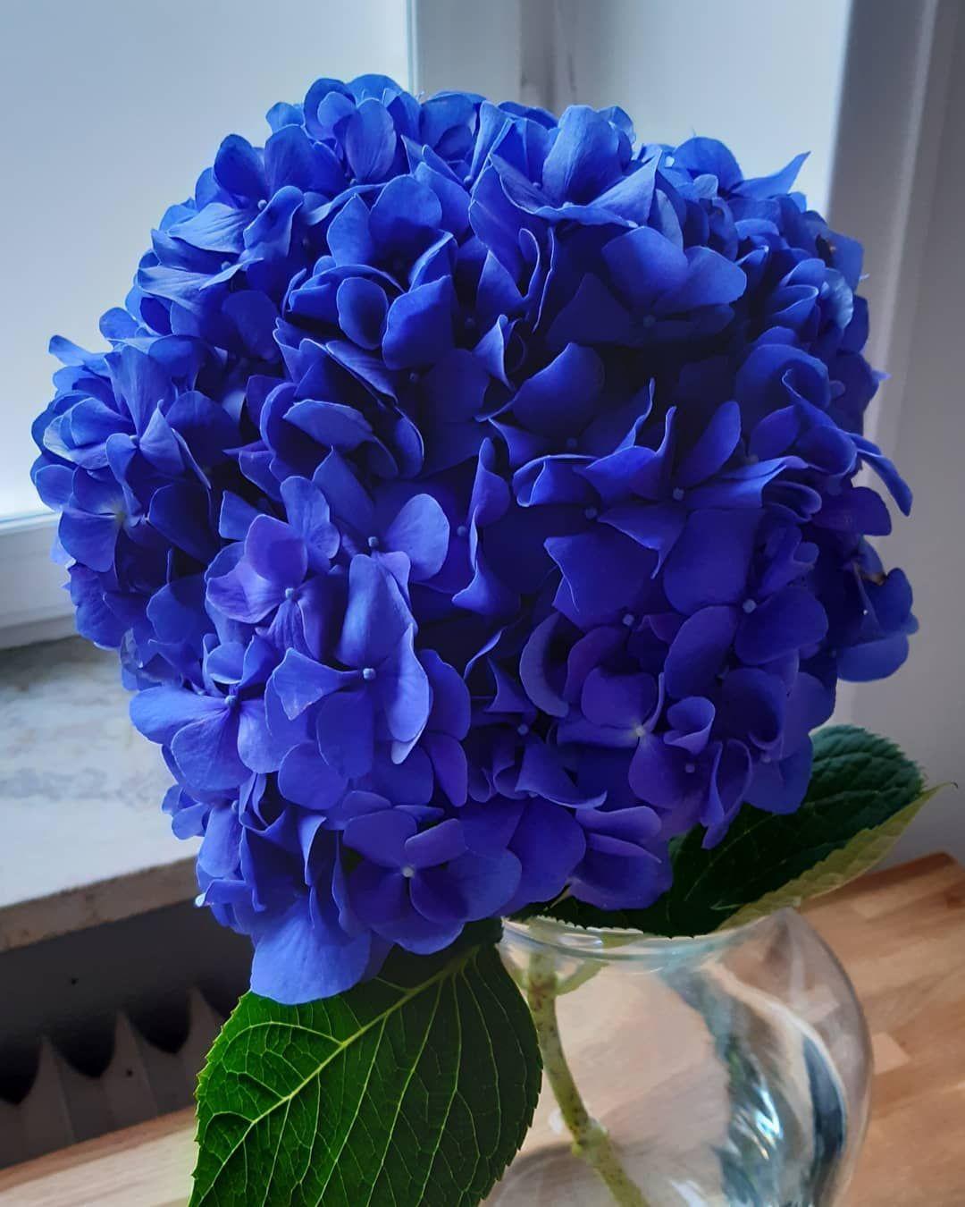 Den Forsta Blomma I Mitt Nya Hem Das Erste Mal Blumchen In Der Neuen Wohnung First Time Fresh Flowers At My New Home Hortensien Hortensia No Plants
