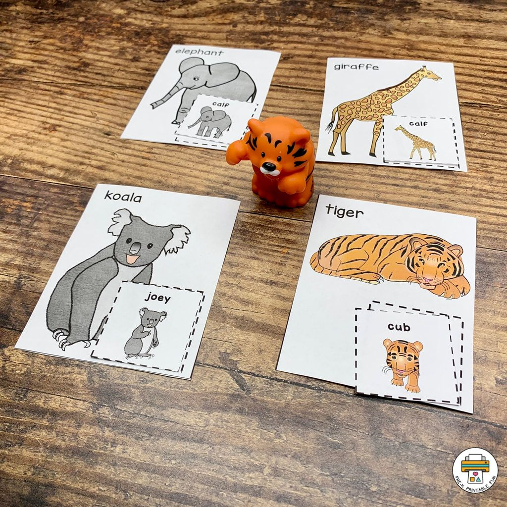 Zoo Activity Pack 8 7 0 Comments This Zoo Activity