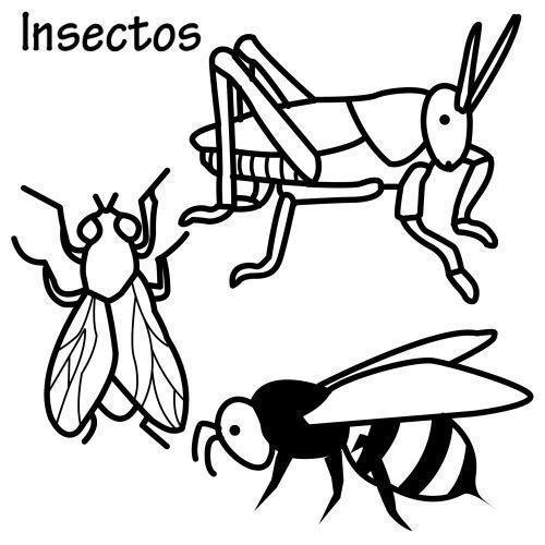 Dibujos De Insectos Para Colorear Insectos Para Colorear Zanzo Us Dibujos Mariposas Para Colorear Insectos