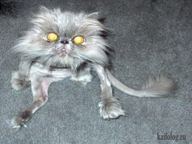 картинки про приколы кошек