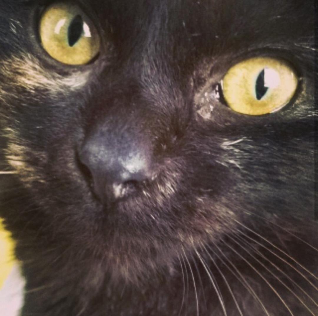 Closeup of my beautiful Indy http://ift.tt/2cBXdw3