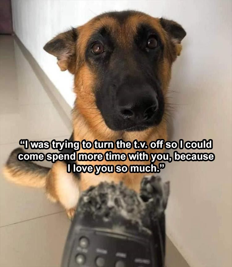 Top 28 Funny Animal Memes Of The Day Funny Dog Images Funny Animal Memes Funny Dog Captions
