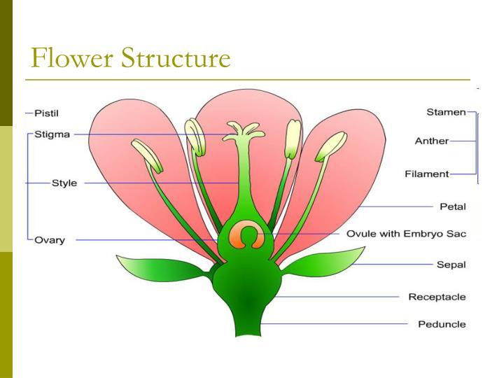 Gymnosperm Vs Angiosperm In 2020 Parts Of A Flower Flower Structure Gymnosperm
