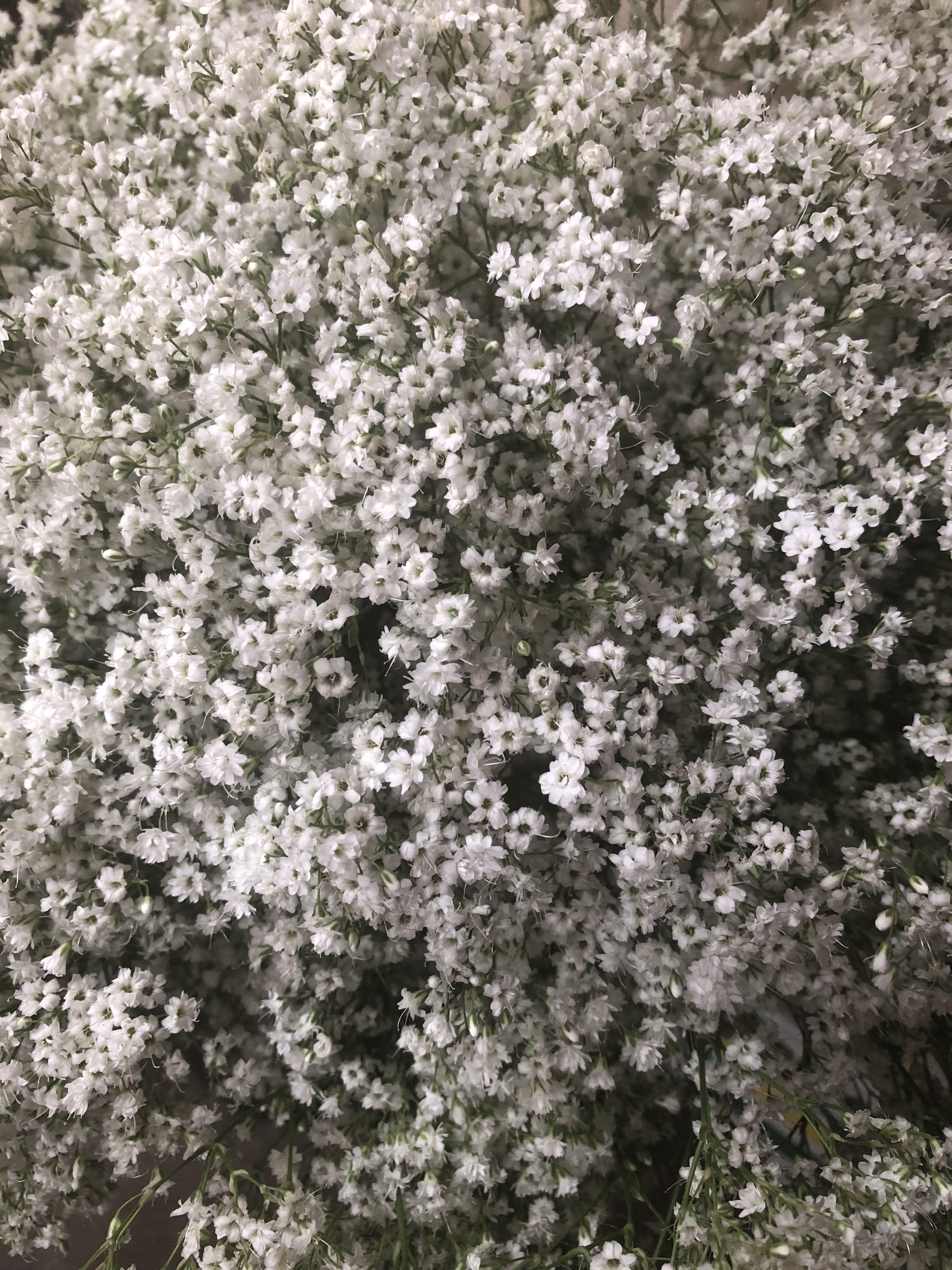 Gypsum Flower Market Flowers Gypsum