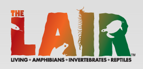 The Lair Living Amphibians Invertebrates And Reptiles Is The Newest Exhibit To Open At The Los Angeles Zoo And Bot Los Angeles Zoo Griffith Park Amphibians