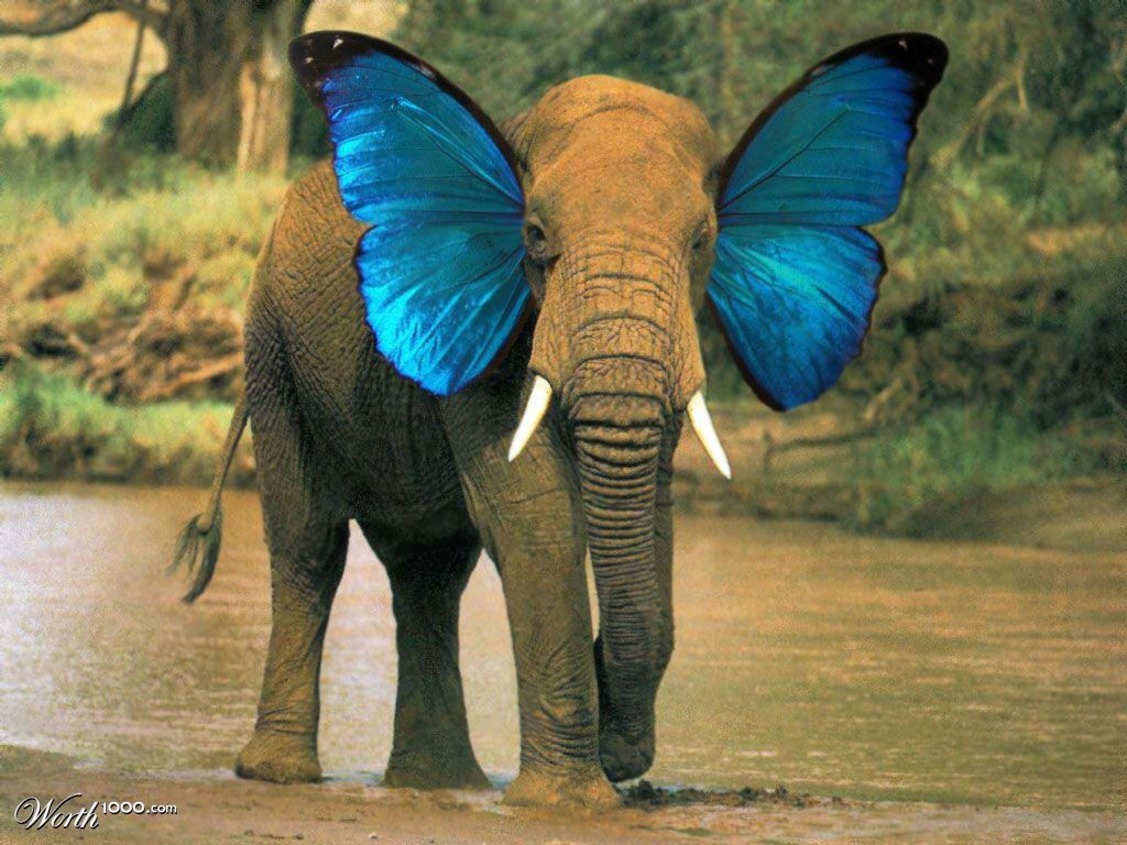 Elephant butterfly - Worth1000 Contests   Unreal exotic look ...