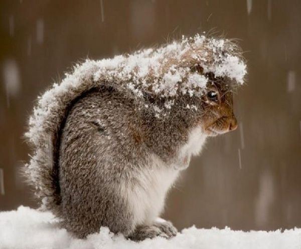 Image result for animals in the snow images