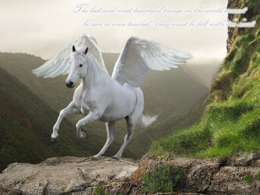 Real Pegasus Horse | Beautiful white pegasus by ...