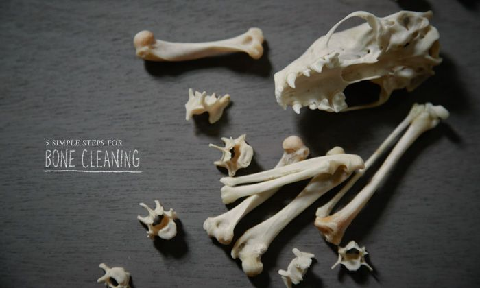 5 Simple Steps For Processing And Cleaning Bones Stuck With Pins Animal Bones Bone Crafts Bone Carving