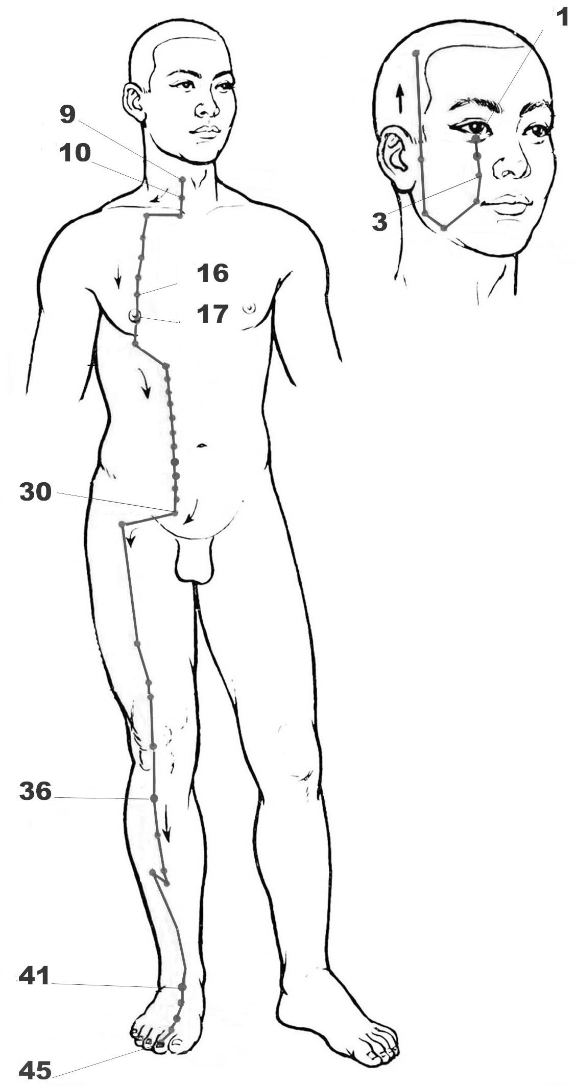 Chart And Symptoms Of The Stomach Meridian According To