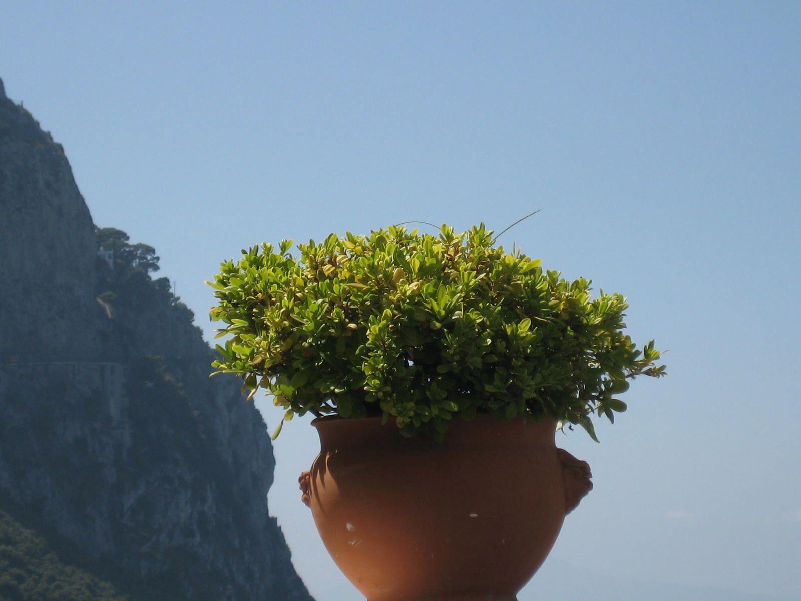 ... simply Capri!