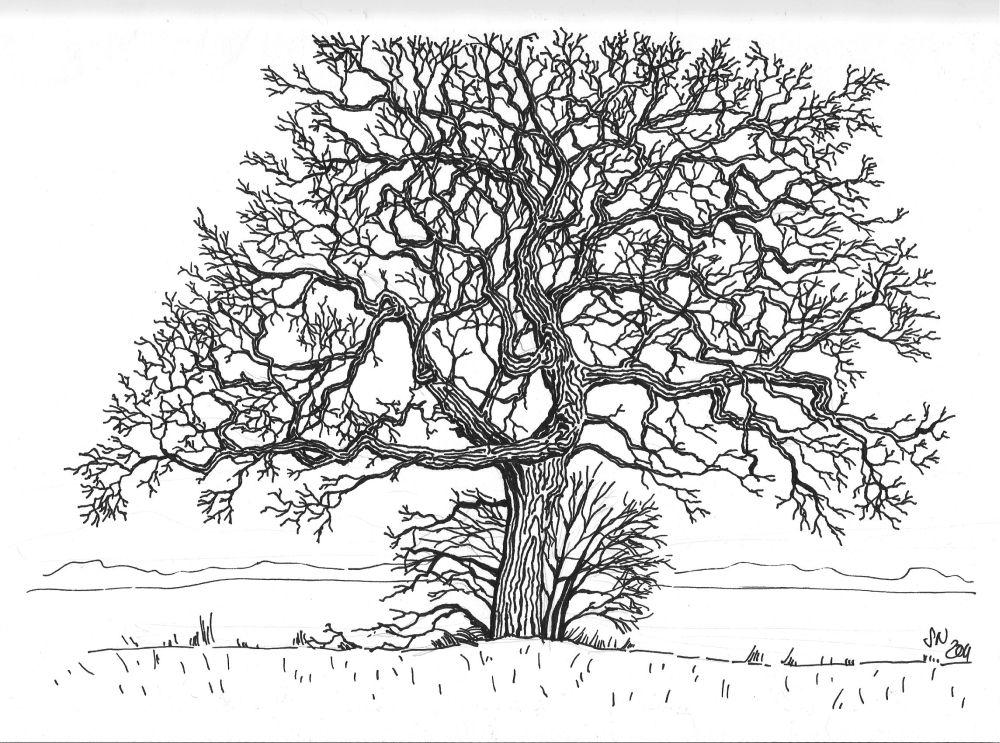 Pin de Jerry Miller en Pencil - Tree Sketching Methods | Pinterest