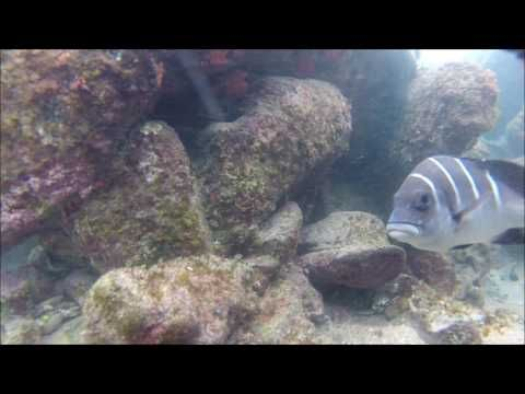 Snorkeling Cape Vidal, South Africa - YouTube