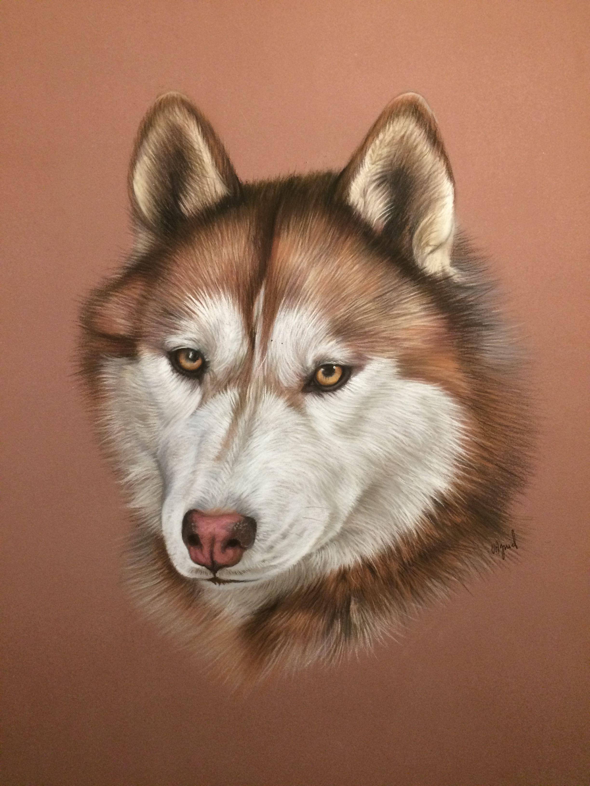 dessin au pastel de husky   Pastels in 2019   Dog art, Dog ...