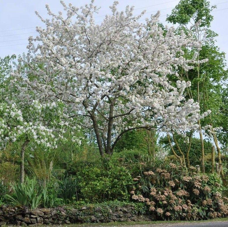 Malus evereste giardini garden trees garden e moon garden for Alberi piccoli da giardino