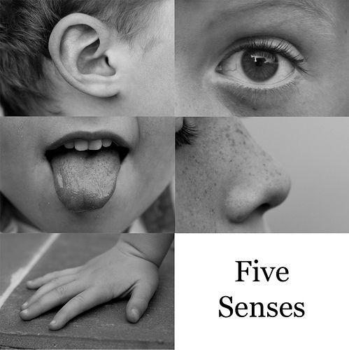 Resources The Five Senses Senses Preschool Senses Activities Creative Learning