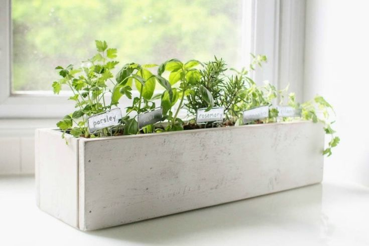 How to create a beautiful kitchen herb garden is part of Herb garden planter, Herb garden in kitchen, Diy herb garden, Garden planters diy, Herb garden pots, Herb garden boxes - How to create a beautiful kitchen herb garden from start to finish  Simple tutorial for building a diy planter box and planting an indoor herb garden