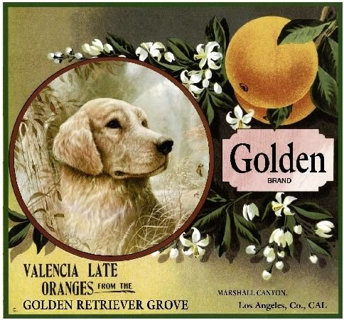 Marshall Canyon Golden Retriever Dog Orange Citrus Crate Label Art