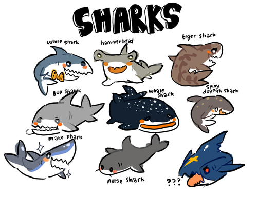 Hibrid56 Some Of My Favorite Sharks With Images Cute Shark