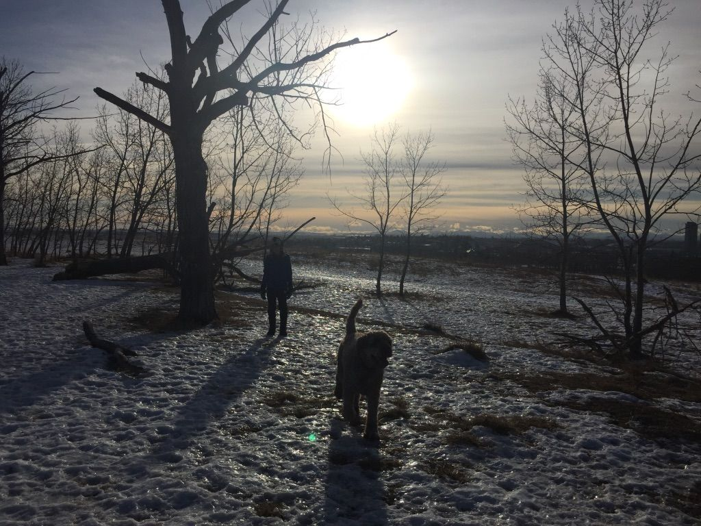 Amazing off leash dog park with views of the mountains and