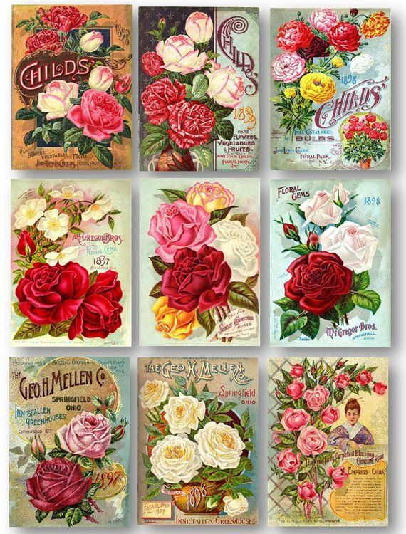 Roses Vintage Seed Catalogue Covers Set of 9 Art Prints Shabby Chic