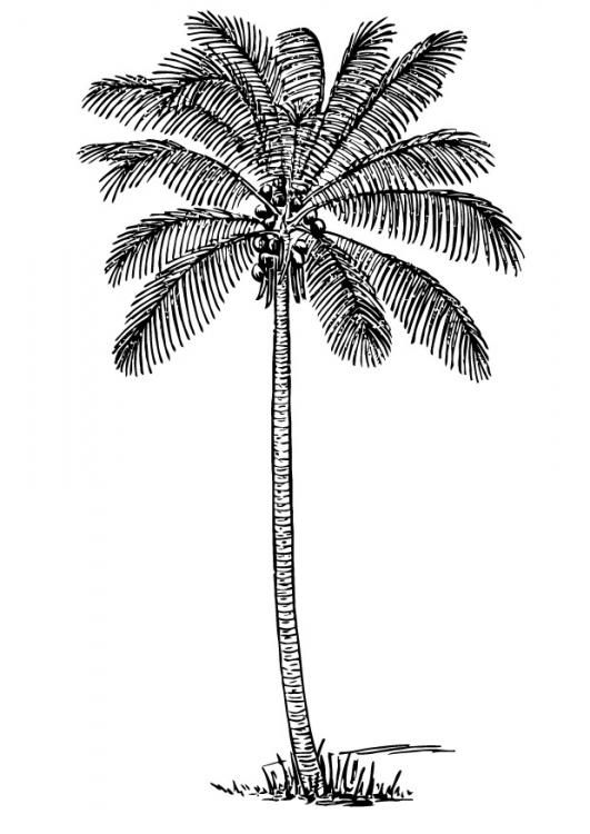Coloring page coconut tree - img 13356. | Veppalodai | Pinterest ...