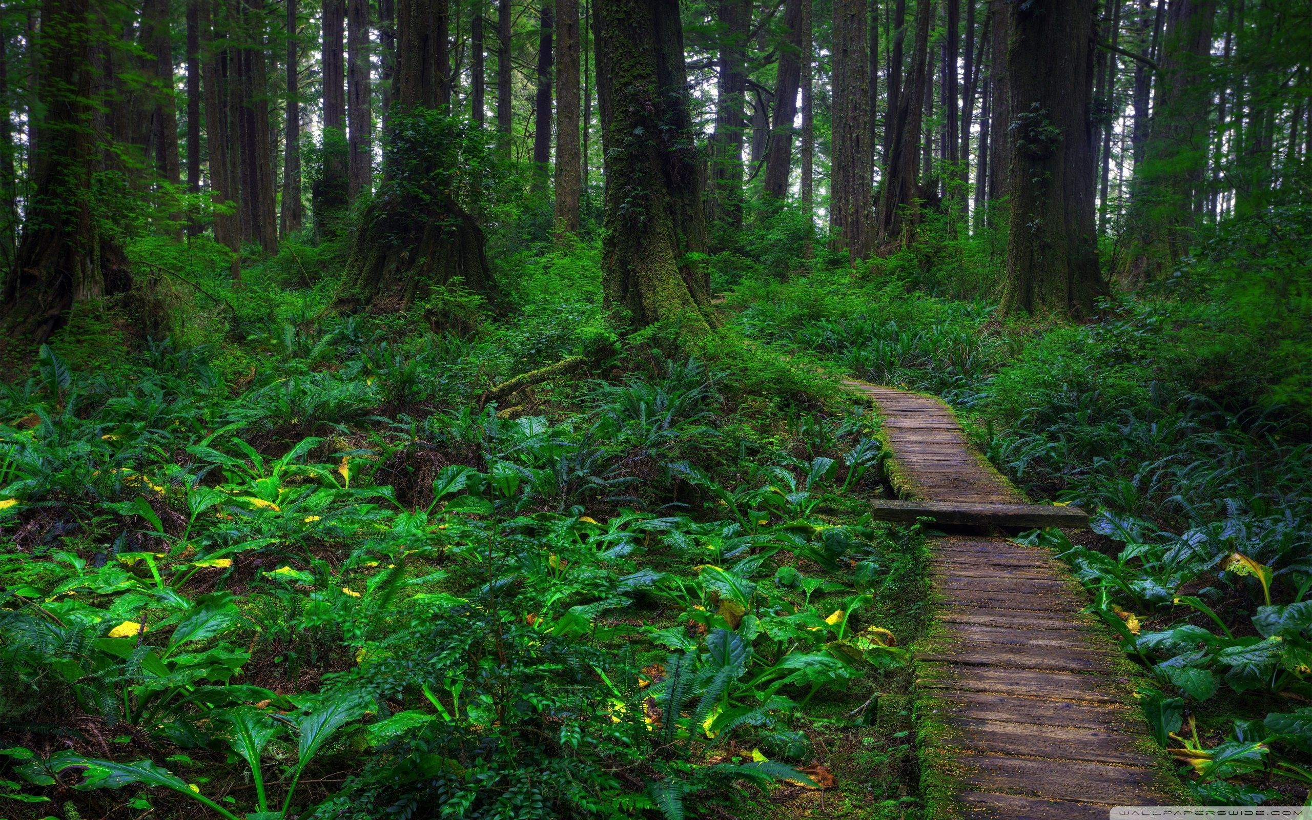 Beautiful Forest Wallpapers 06 Best Free Beautiful Forest Images For Desktop Check More At Https Www Pictor In 2020 Landscape Wallpaper Forest Wallpaper Forest Path
