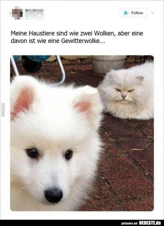 Photo of Mis mascotas son como dos nubes, pero una de ellas es … | Fotos divertidas, juegos …
