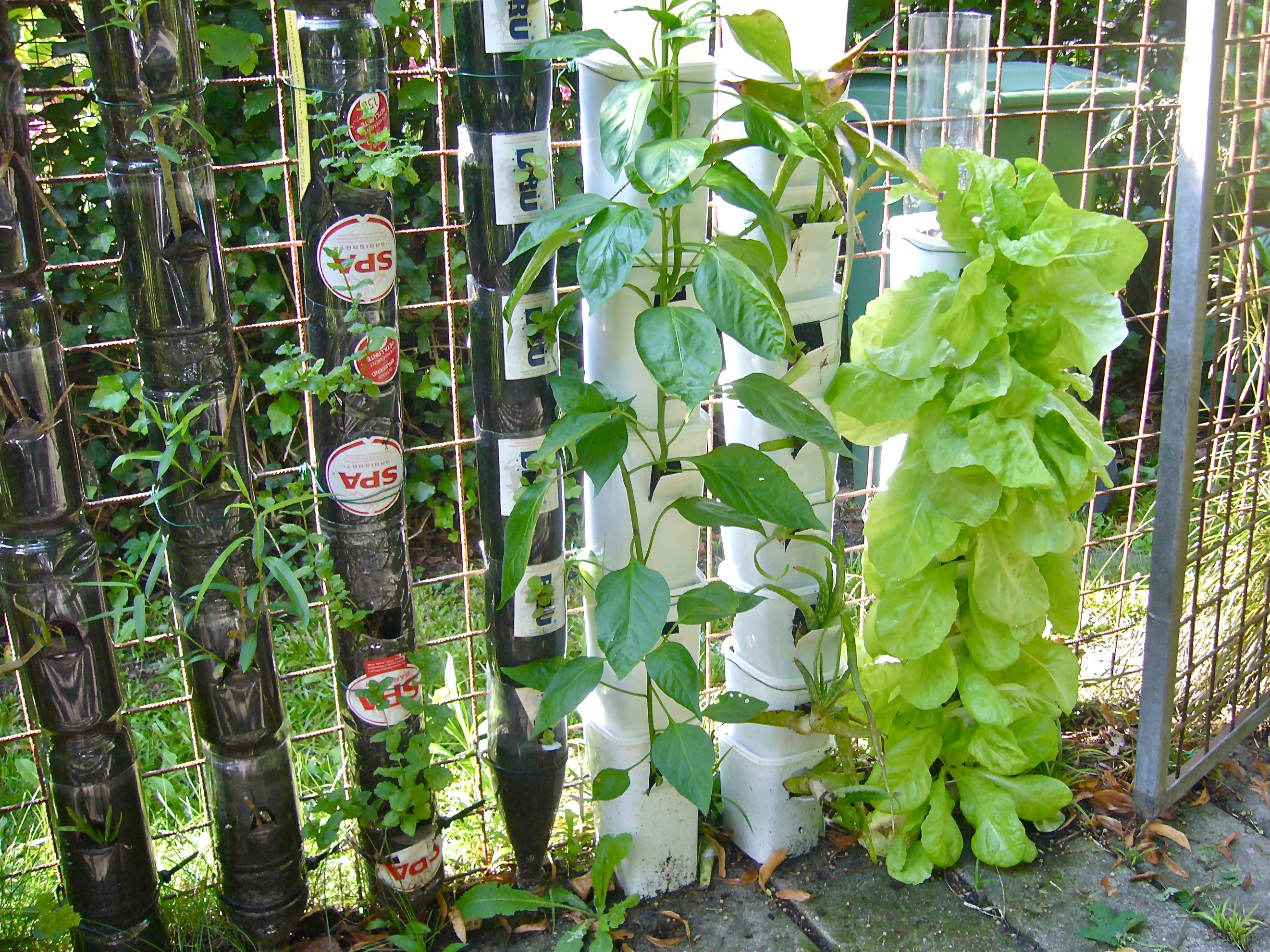 Practical tips for container and vertical gardening Willem Van Cotthem