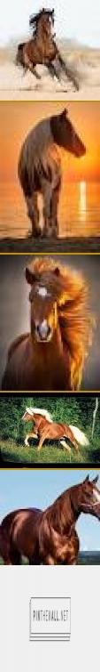 cavalos - Pesquisa Google - created via https://pinthemall.net