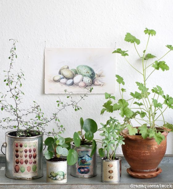 dosen ostern pinterest houseplants and gardens. Black Bedroom Furniture Sets. Home Design Ideas