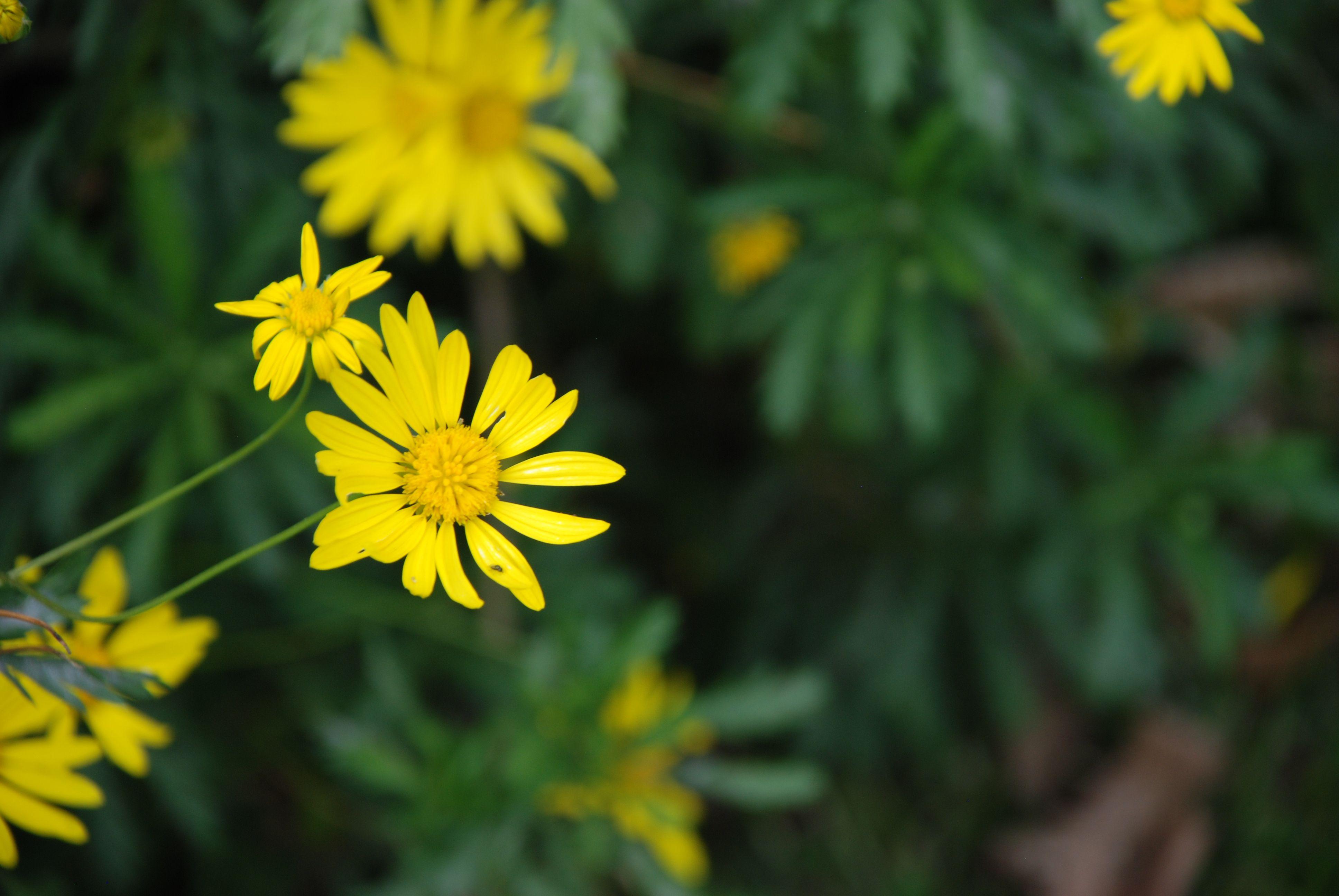 Beautiful Flower in Arusha