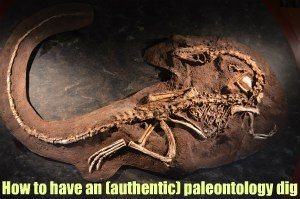 Create an authentic paleontology dig