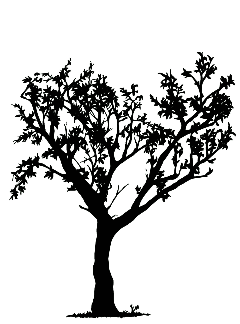 Trafaret Dereva Tree Clipart Tree Drawing Clipart Black And White