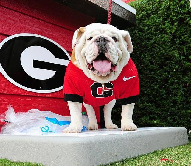 Sports Illustrated 2 College Mascot Georgia Bulldog Mascot