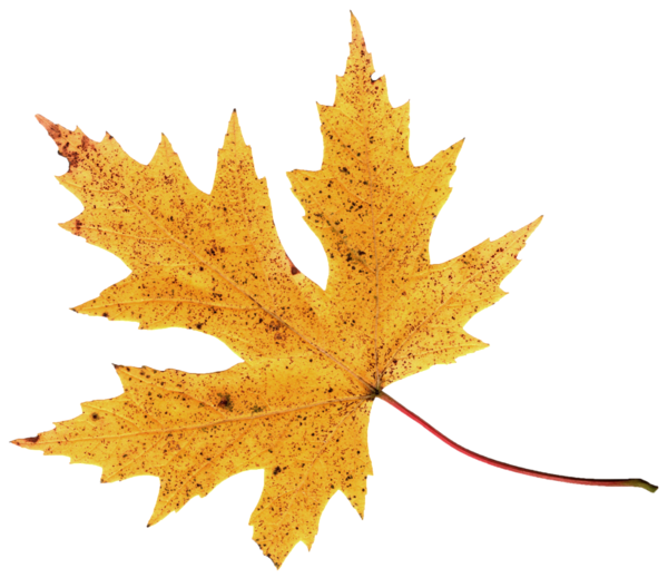Autumn Leaf Png Image Autumn Leaves Png Images Png