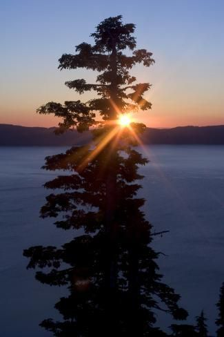 Photographic Print: Silhouette of Coniferous Tree Near Crater Lake in Crater Lake National Park, Oregon by Philip Schermeister : 24x16in #craterlakenationalpark Photographic Print: Silhouette of Coniferous Tree Near Crater Lake in Crater Lake National Park, Oregon by Philip Schermeister : 24x16in #craterlakenationalpark