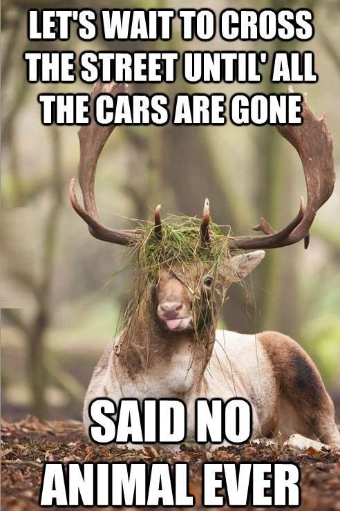 Funny Deer Captions : funny, captions, Funny, Hunting, Quotes, Ideas, Deer,, Funny,
