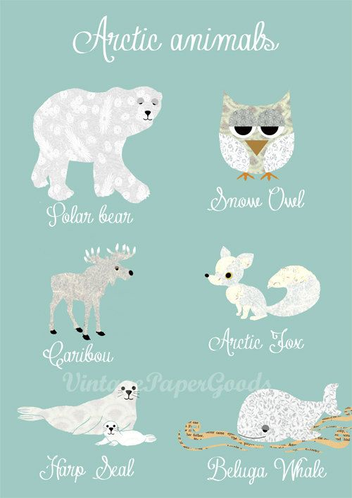 cute arctic animals collage poster print with bear owl fox whale