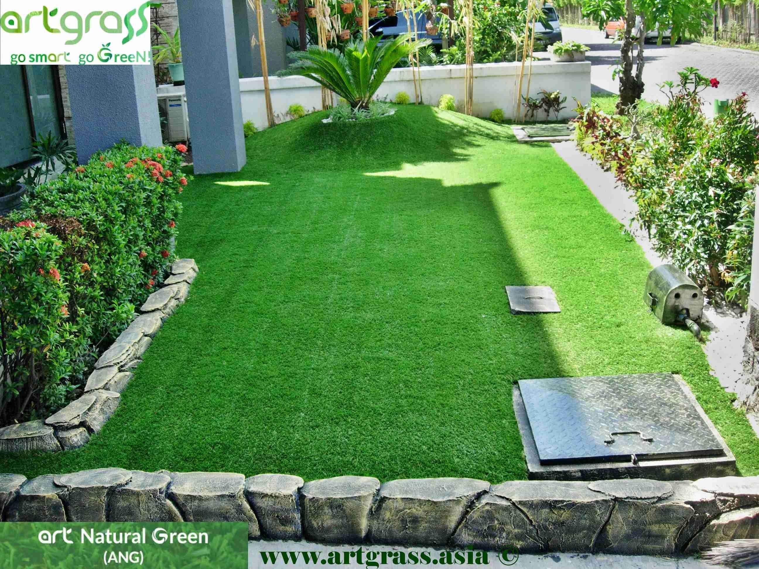 Inilah 7 Jenis Rumput Untuk Taman di Rumah Kamu rumput