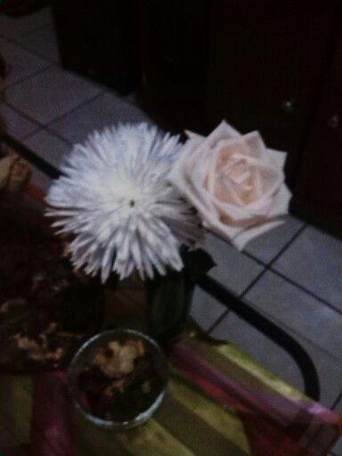 Crisantemo y rosa clanca