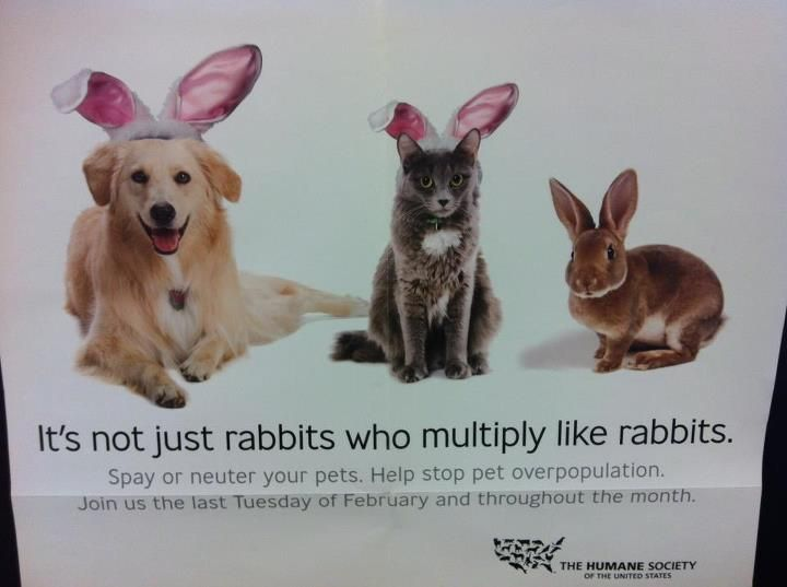 It S Not Just Rabbits Who Multiply Like Rabbits Dog Daycare Animal Abuse Awareness Pet Clinic