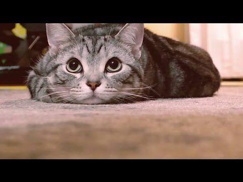 猫バンバン Project Movie By Nissan Knockknockcats 猫 子猫 猫 猫 写真