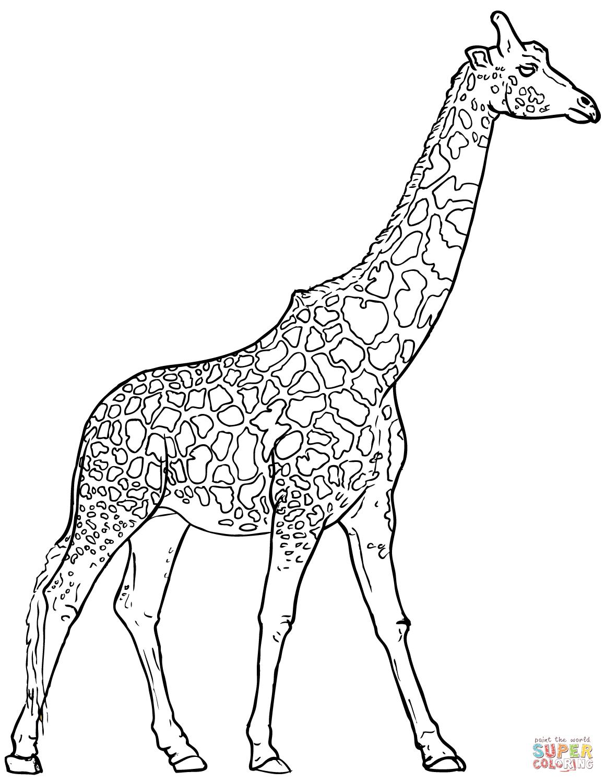 Realistic Giraffe Coloring Pages Giraffe Coloring Pages Elephant Coloring Page Animal Coloring Pages