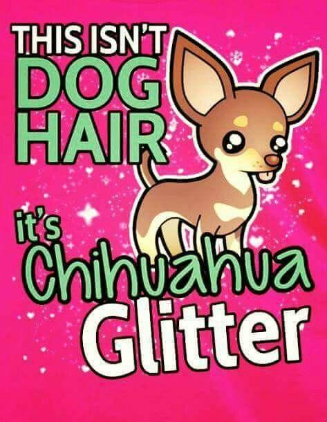 Chihuahua Glitter Chihuahua Funny Chihuahua Quotes Chihuahua