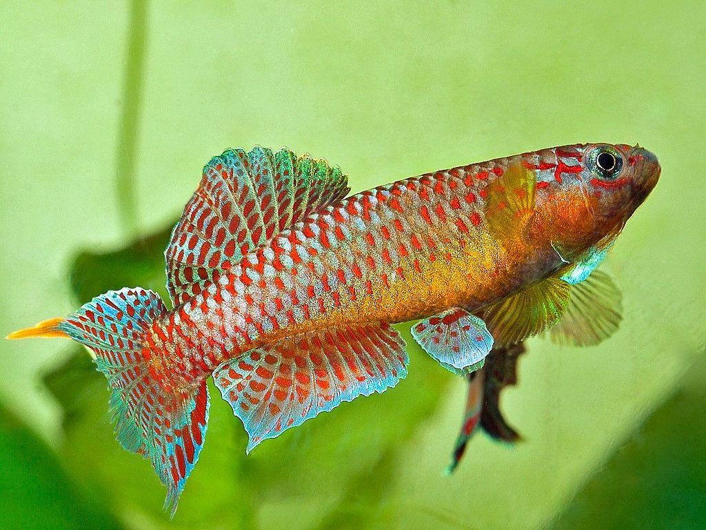 muni | Aquariums, Fish aquariums and Tropical fish