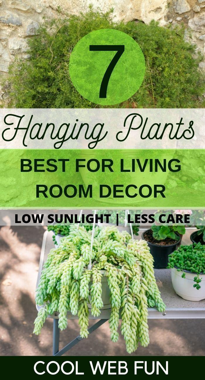 Indoor Hanging Plants for Low Sunlight #hangingplantsindoor