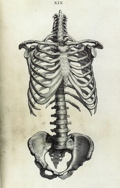 human skeleton drawings pinterest - google search | artwork, Skeleton