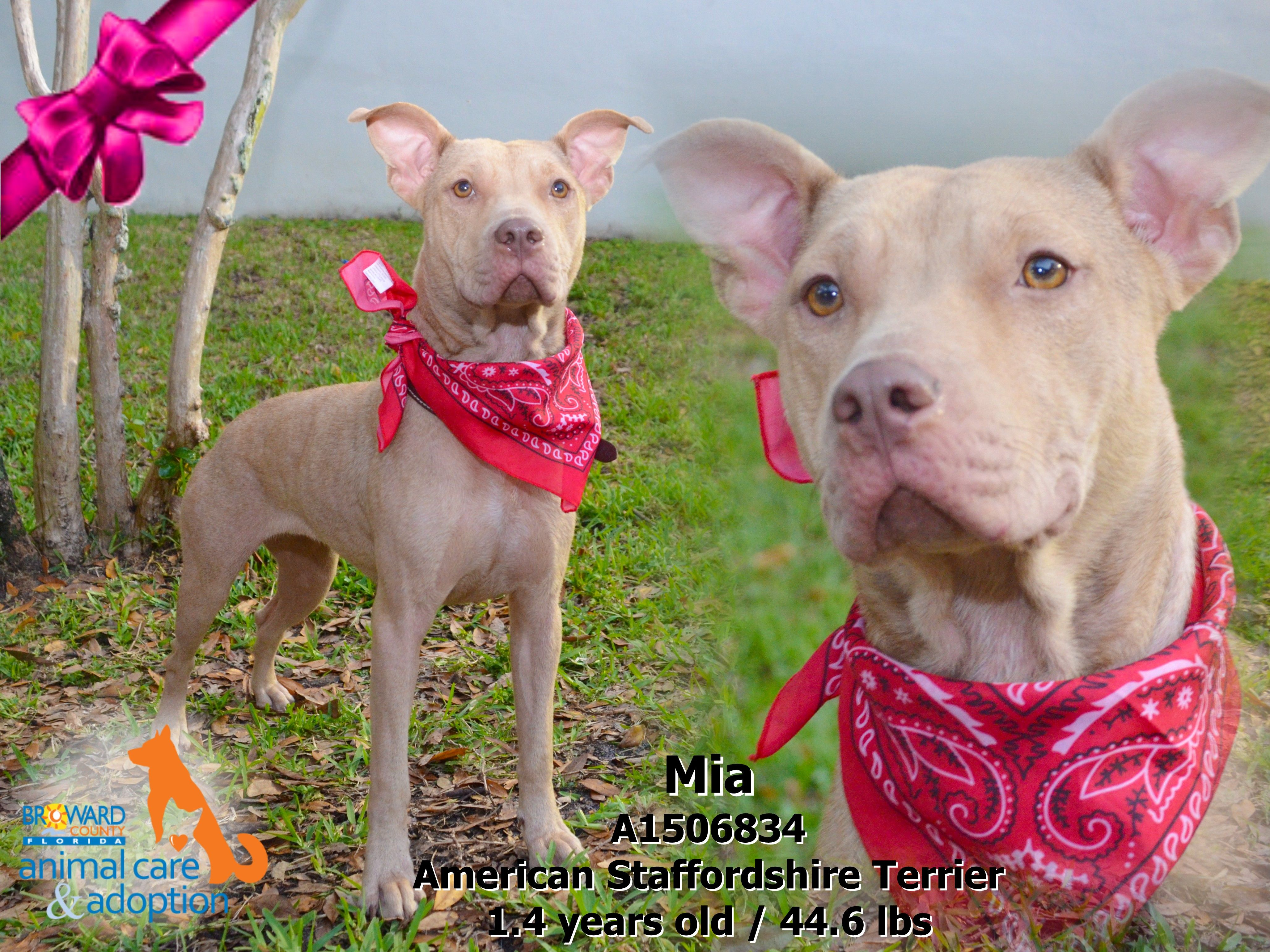 Hi, my name is Mia and I'm available for adoption at